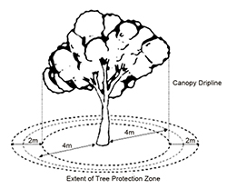 Diagram of a tree showing the extent of the tree protection zone.