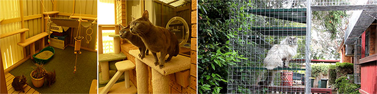 Series of photos of cats in containment cages
