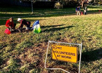 volunteer planting
