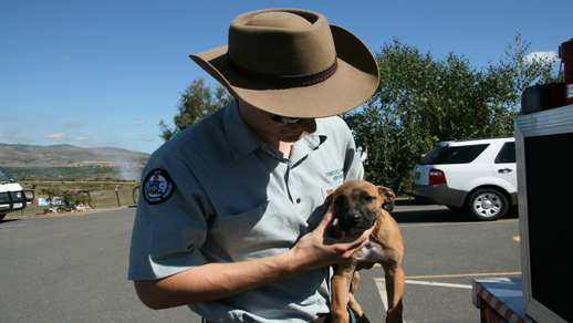 Domestic Animal Services ranger holding a puppy.