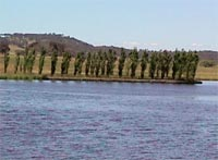 A view across Gungahlin Pond.