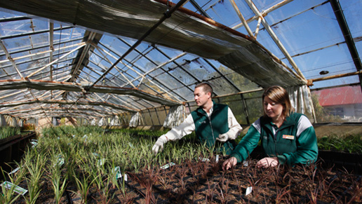 Staff working at Yarralumla Nursery